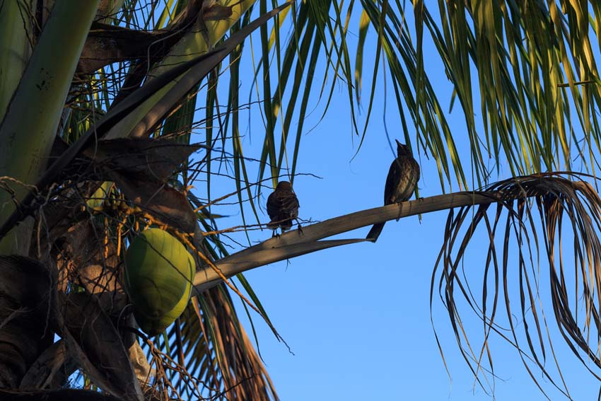 Coconut tree and visitors in sunset