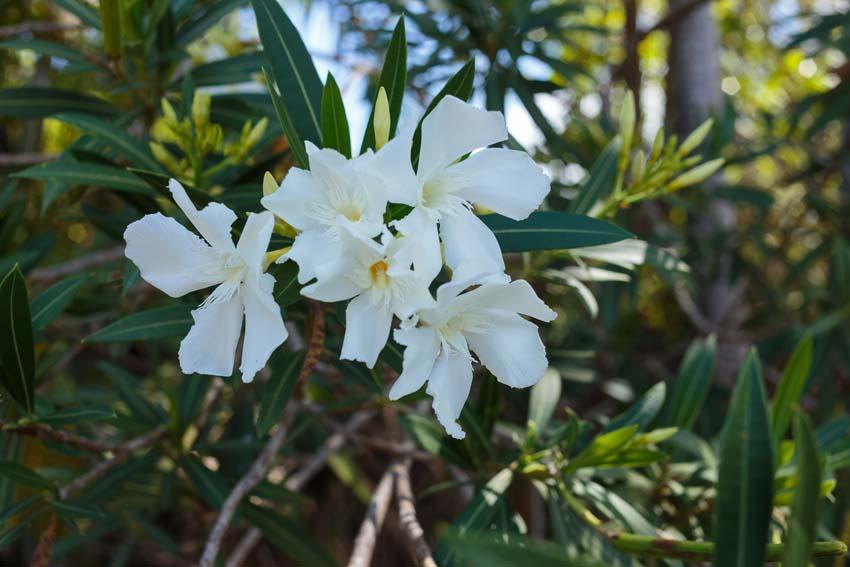 Unknown white blossoms